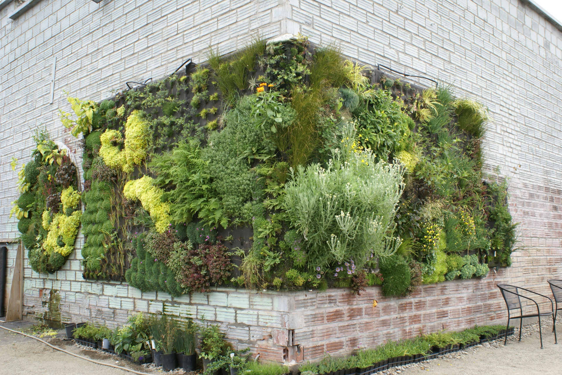 Living holmes design green wall systems for Green wall system